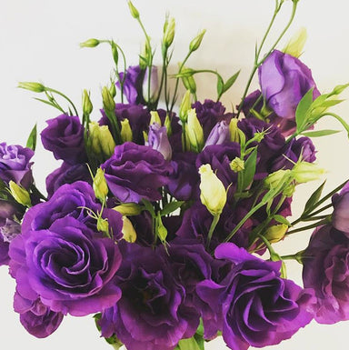 Lisianthus- Deep Purple