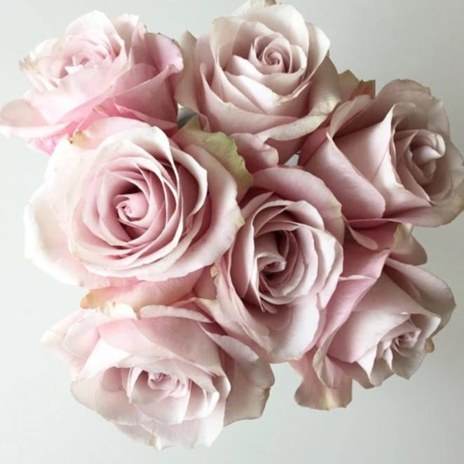 Secret Garden Roses Soft Pink Diy Wedding Flowers Flower Moxie