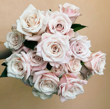 Sweet Escimo blush Rose