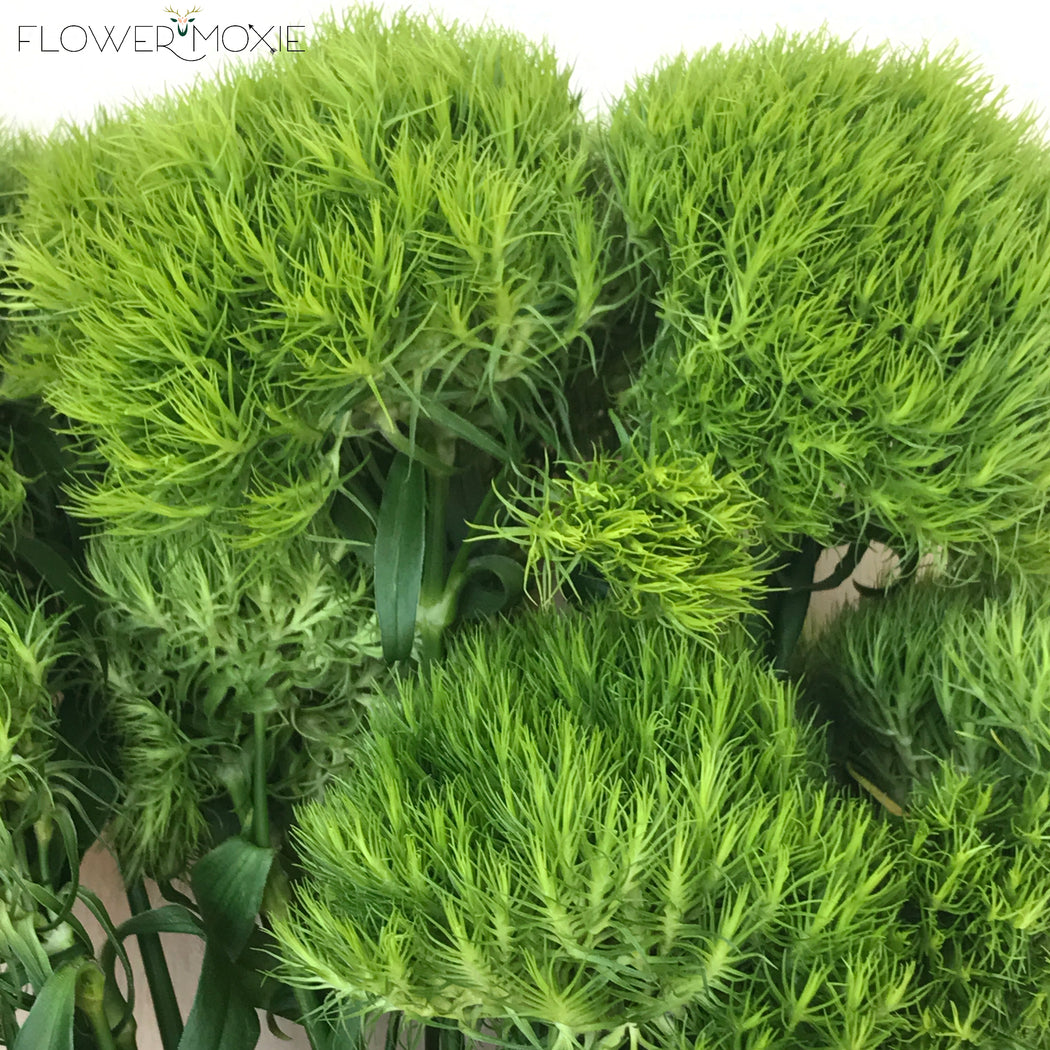 Dianthus | Green Trick | Flower Moxie | DIY Wedding Flowers