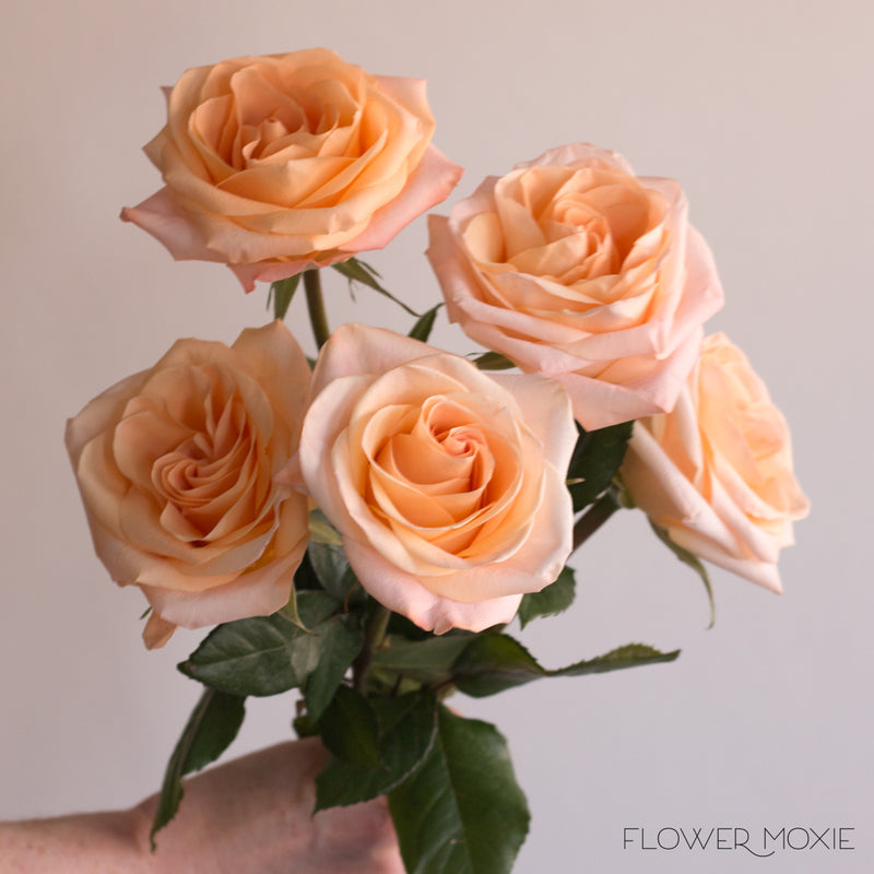 Tiffany Peach Roses