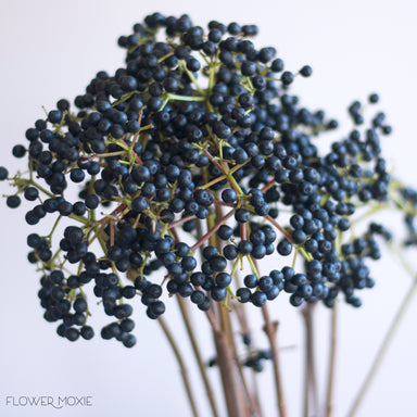 Viburnum berry, privet berry, purple berry flower, dark berry flower, winter bouquet ideas, winter wedding ideas, winter wedding colors moody dark, ways to save money with wedding flowers, diy bride, diy flowers, diy bouquet, diy wedding, diy wedding ideas, flower moxie, what does a bikini rose look like, wedding ideas, make your own bouquet, make your own wedding bouquet, flower moxie