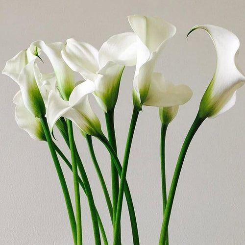 White Mini Calla Lily Diy Wedding Flowers Flower Moxie