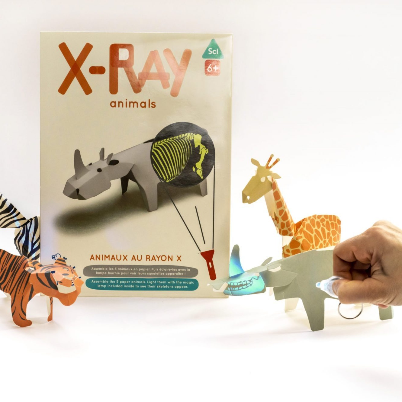 Koa Koa: X Ray Animals