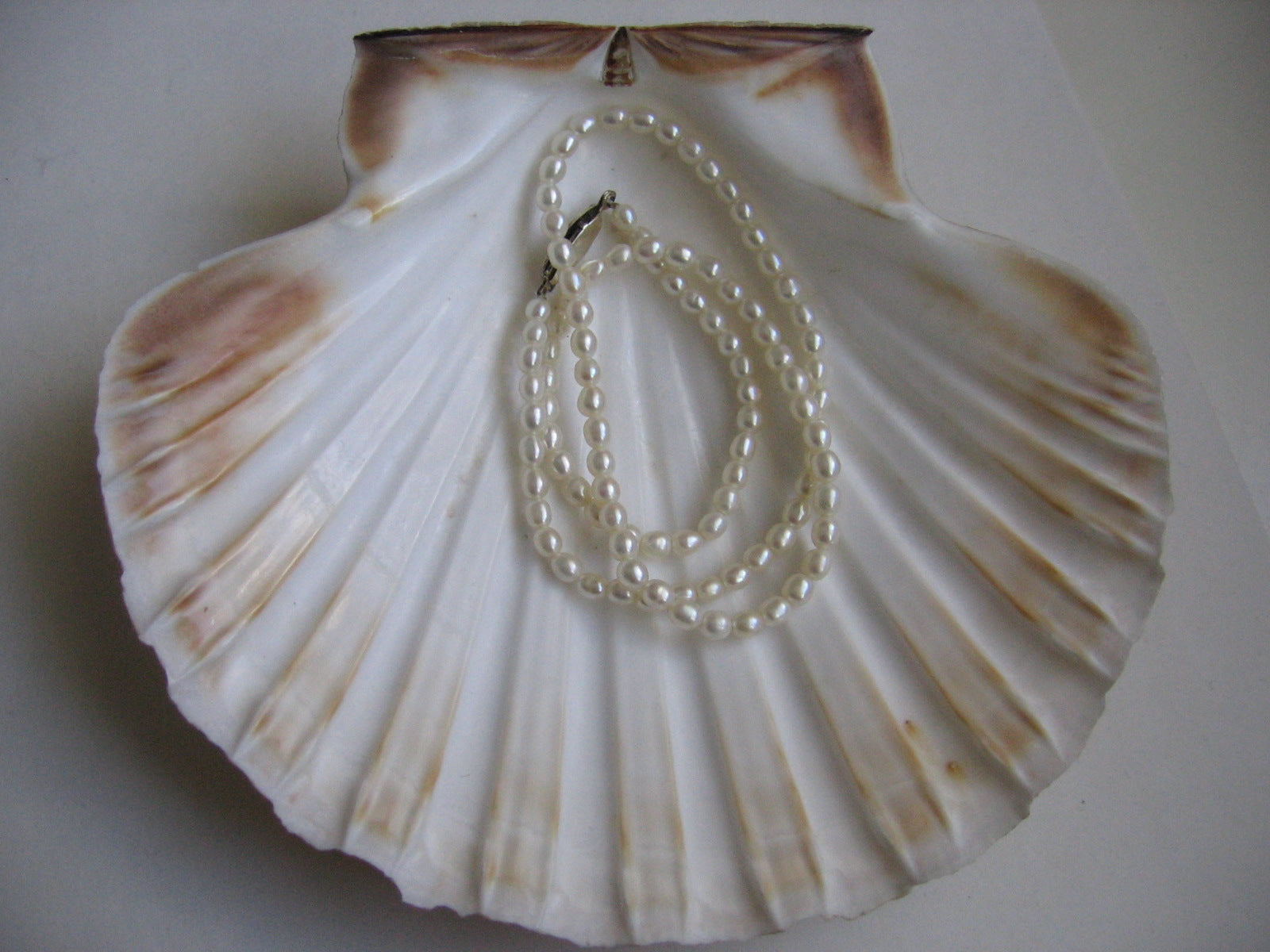authentic pearls in shell