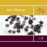 Dry Flower Color Full Mix (Naturaleza muerta)