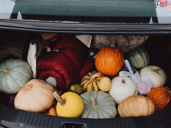 Instagram | Rosalynne Love | Pumpkins In The Trunk