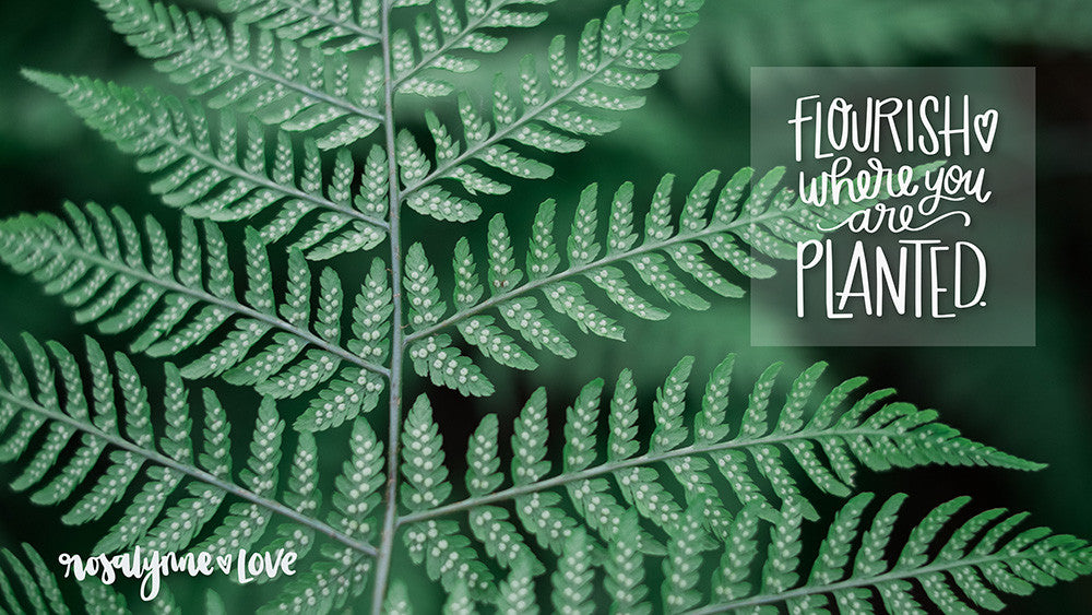 """Flourish Where You Are Planted"" // Desktop Background - Rosalynne Love"
