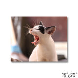 Cat Yawning - 1