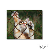 Fenced Cat - 1