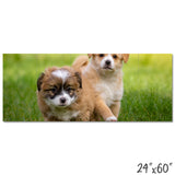 Fluffy Puppies - 1