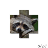 Raccoon - 1