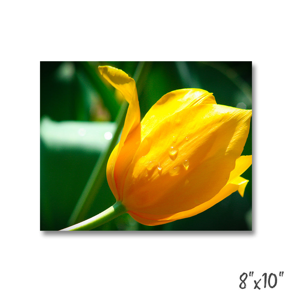 Nature Metal Wall Art - Soft Yellow Tulip Wall Art | BO15 – Bo15