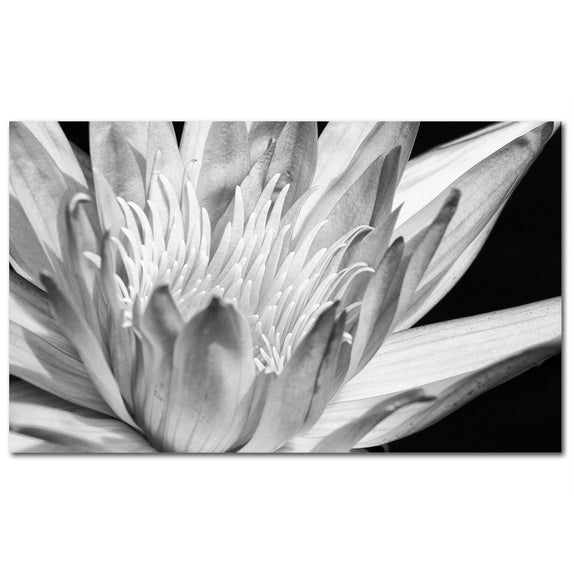 Water Lily - 2