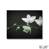 White Orchid - 1