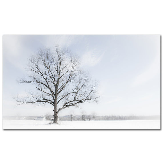 Winter Tree - 1