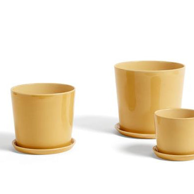 Plant Pots & Vases Botanical Family Saucer L: Warm Yellow - The Union Project