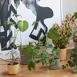 Plant Pots + Vases HAY Botanical Family Pot L: Light Grey - The Union Project, Cheltenham, free delivery
