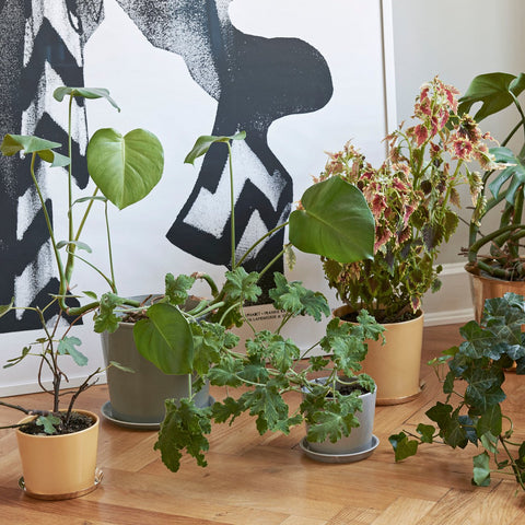 Plant Pots & Vases Botanical Family Pot L: Dusty Green - The Union Project