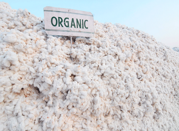 Fabrics: Bamboo VS Organic Cotton - What's the best option?
