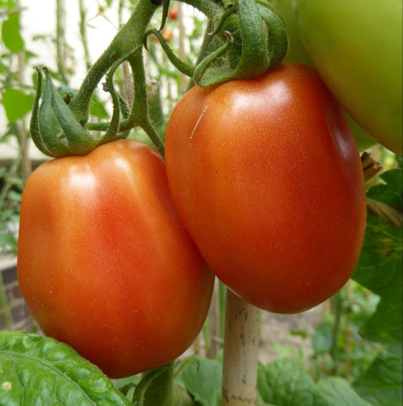 Tomatoes - Roma / Bangalore - 2nd Quality (per 250 g)