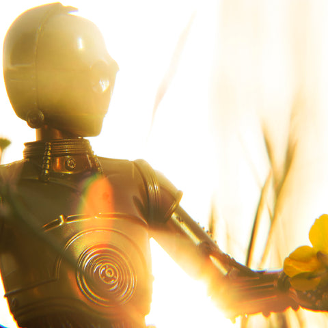 Goldenrod. Toy photography by Tom Milton