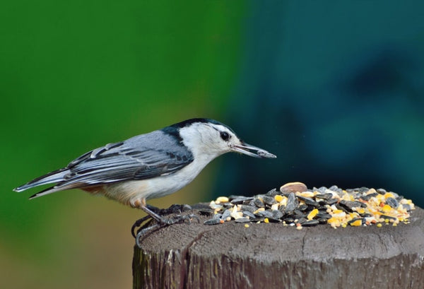 WILD BIRD FEED AND PET CARE