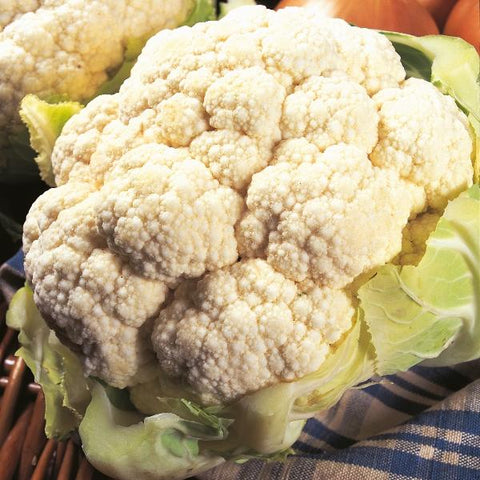 Cauliflower All The Year Round - Flying Dutchman Stores