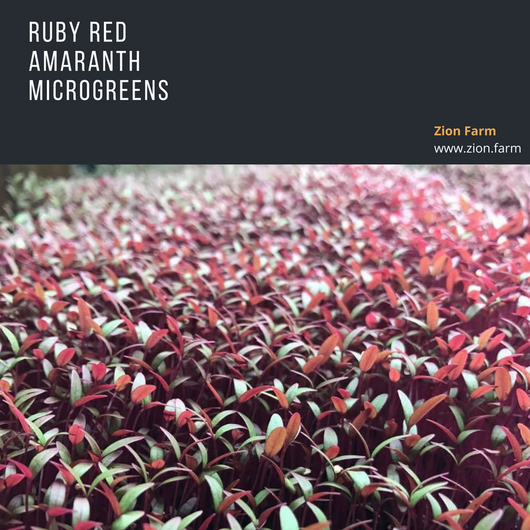 Zion Farm  - Ruby Red Amaranth
