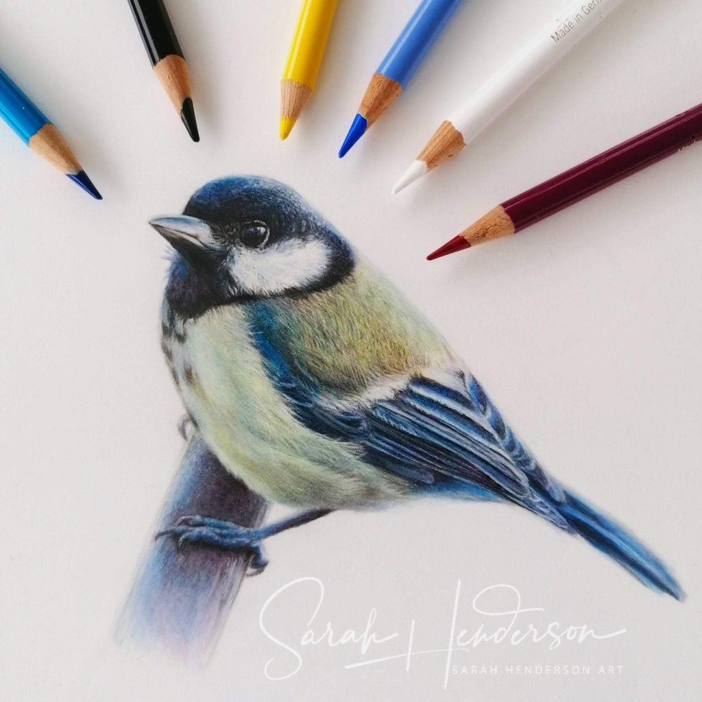 Great Tit Fine Art Print