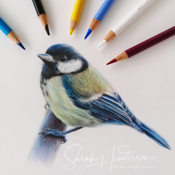 Great Tit. Original drawing.