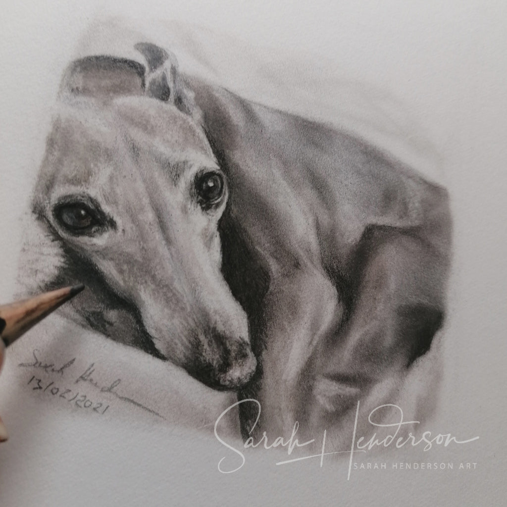 Whippet Drawing Fine Art Print