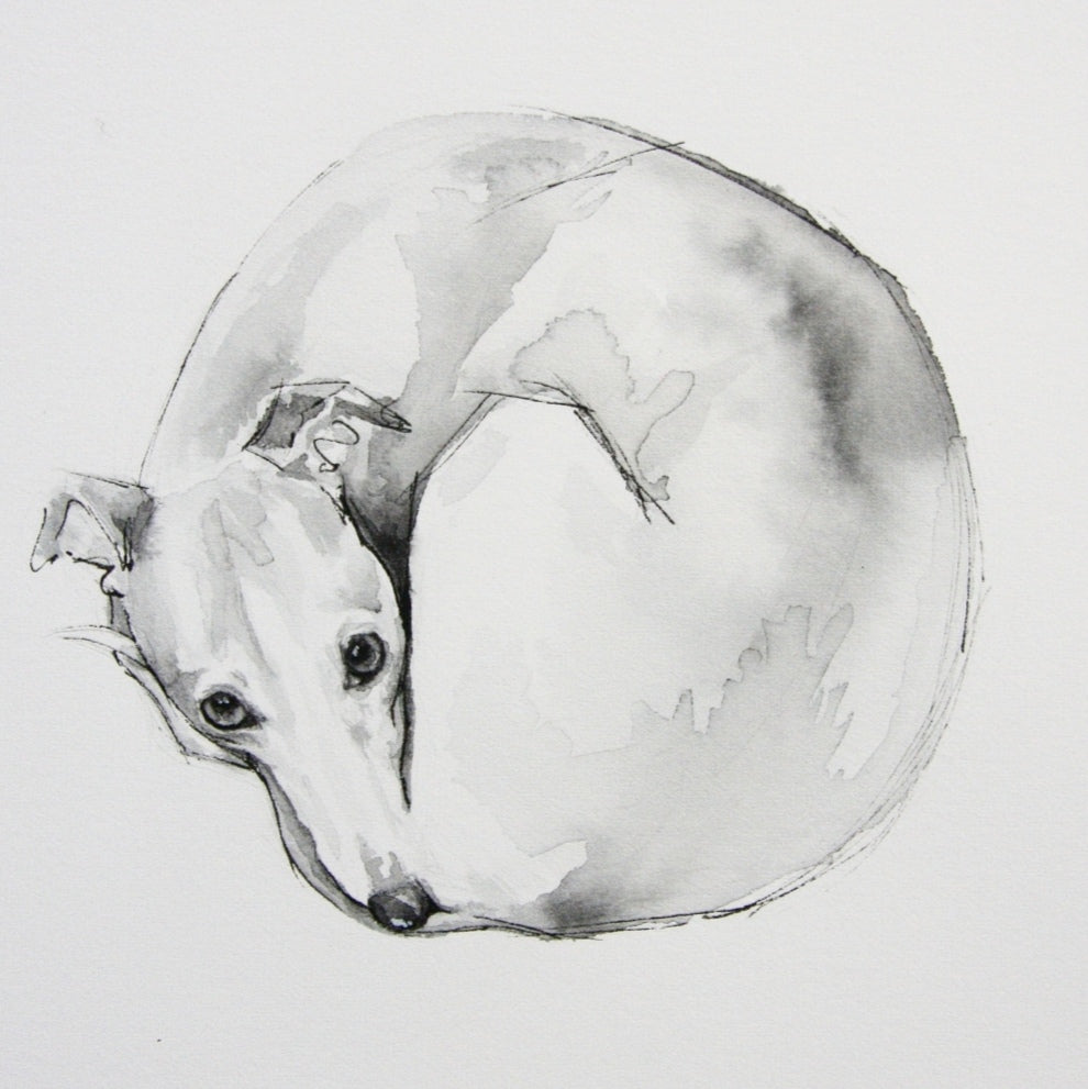 """Whippet curling up to sleep."" Fine Art Print"