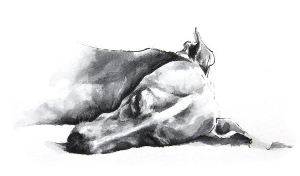 Sleeping Whippet by Sarah Henderson. Limited Edition