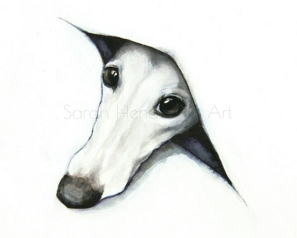Peeping Whippet by Sarah Henderson.