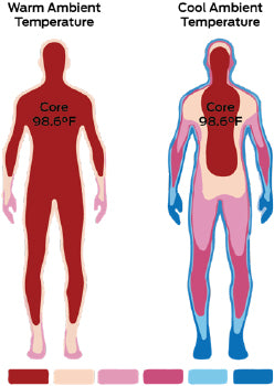 core body temperature thermoregulation