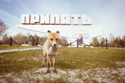 Simon, the Fox of Pripyat / Chernobyl Glass Magnet