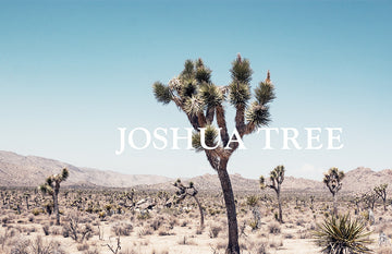 Joshua Tree (horizontal)