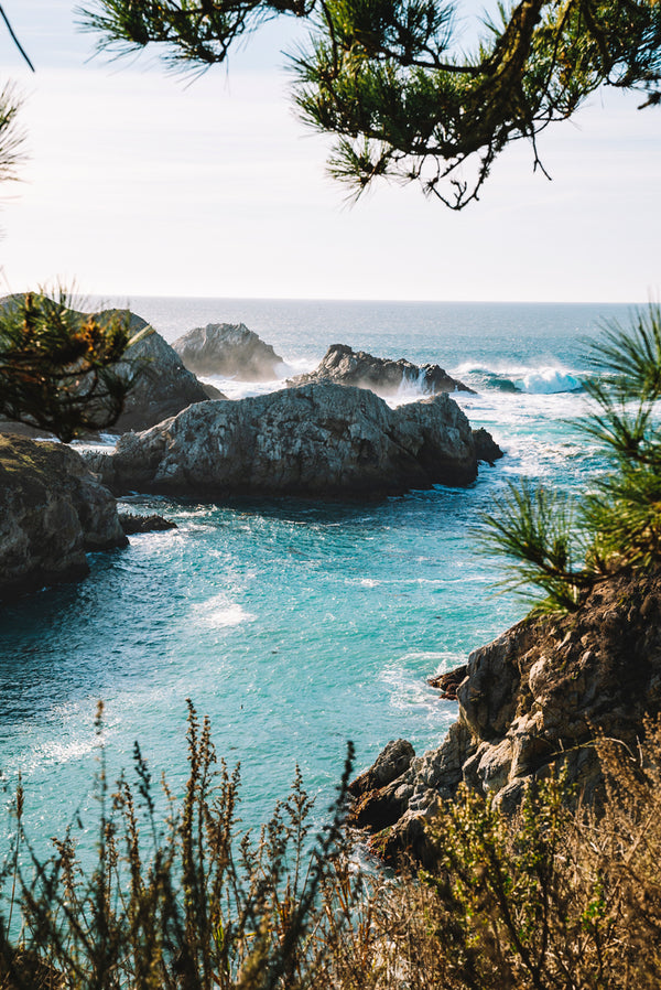 Between the Trees - Point Lobos