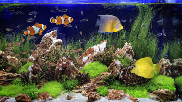 Fish Tank Bubbling Water Sounds white noise is great for relaxation!
