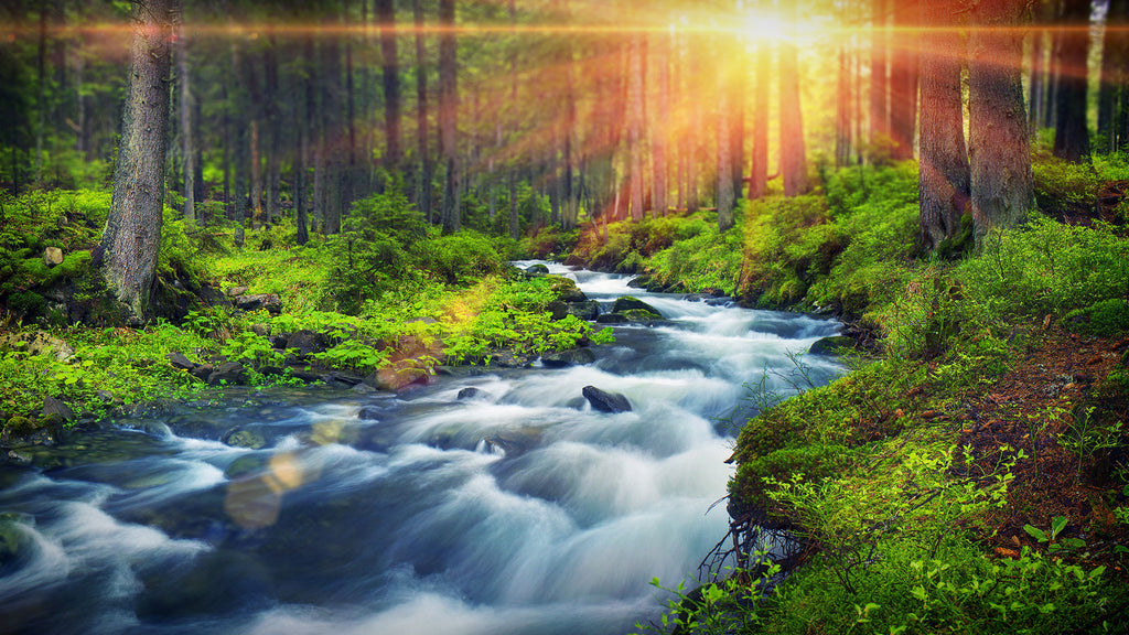 The forest river water sounds create a calming ambience to help you sleep, study or relax.
