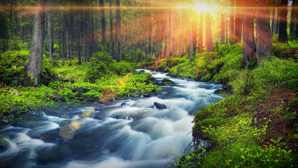 Forest River Peaceful Sounds for Relaxation, Sleep or Studying MP3