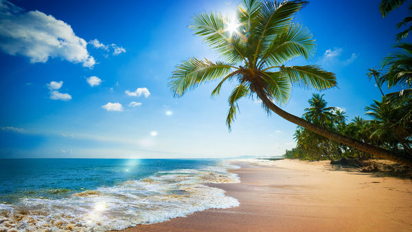 Paradise Beach Ocean Waves Sound MP3