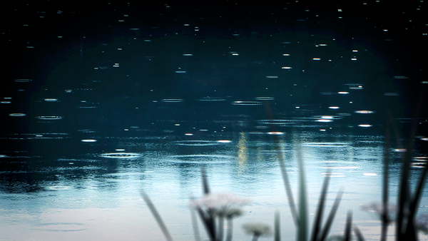 Rain on Pond White Noise MP3