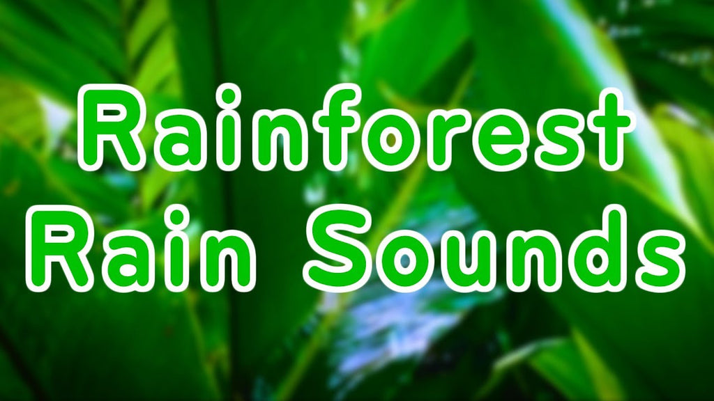 Rainforest Rain Sounds for Relaxation MP3