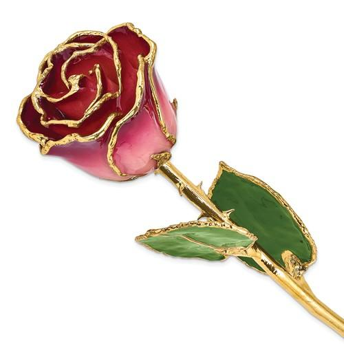 Nespoli Jewelers Pink and Burgundy 24k Gold Dipped Rose