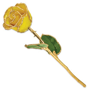 Nespoli Jewelers Yellow 24k Gold Dipped Rose