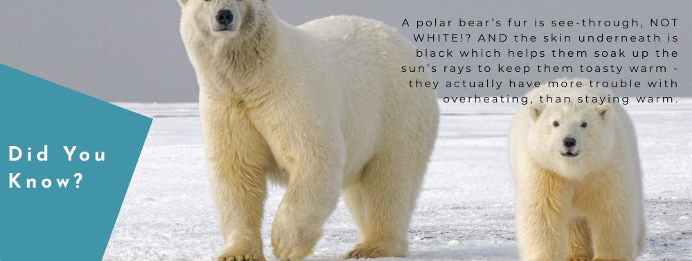 Norte Blog Sustainable Living Polar Bears
