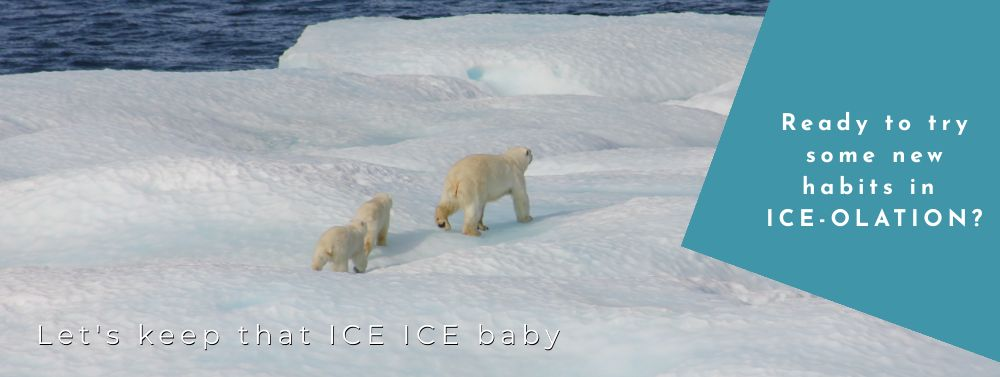 Norte Blog Sustainable Living Polar Bears and Ice