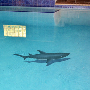 Shark w/Shadow | SSHGRARL | Pool Mosaic by Artistry in Mosaics